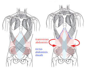 Adjustment on length at the front leads to an adjustment of width at the back of the torso